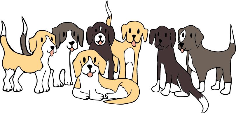 A picture of 7 similar sized beagle dogs.